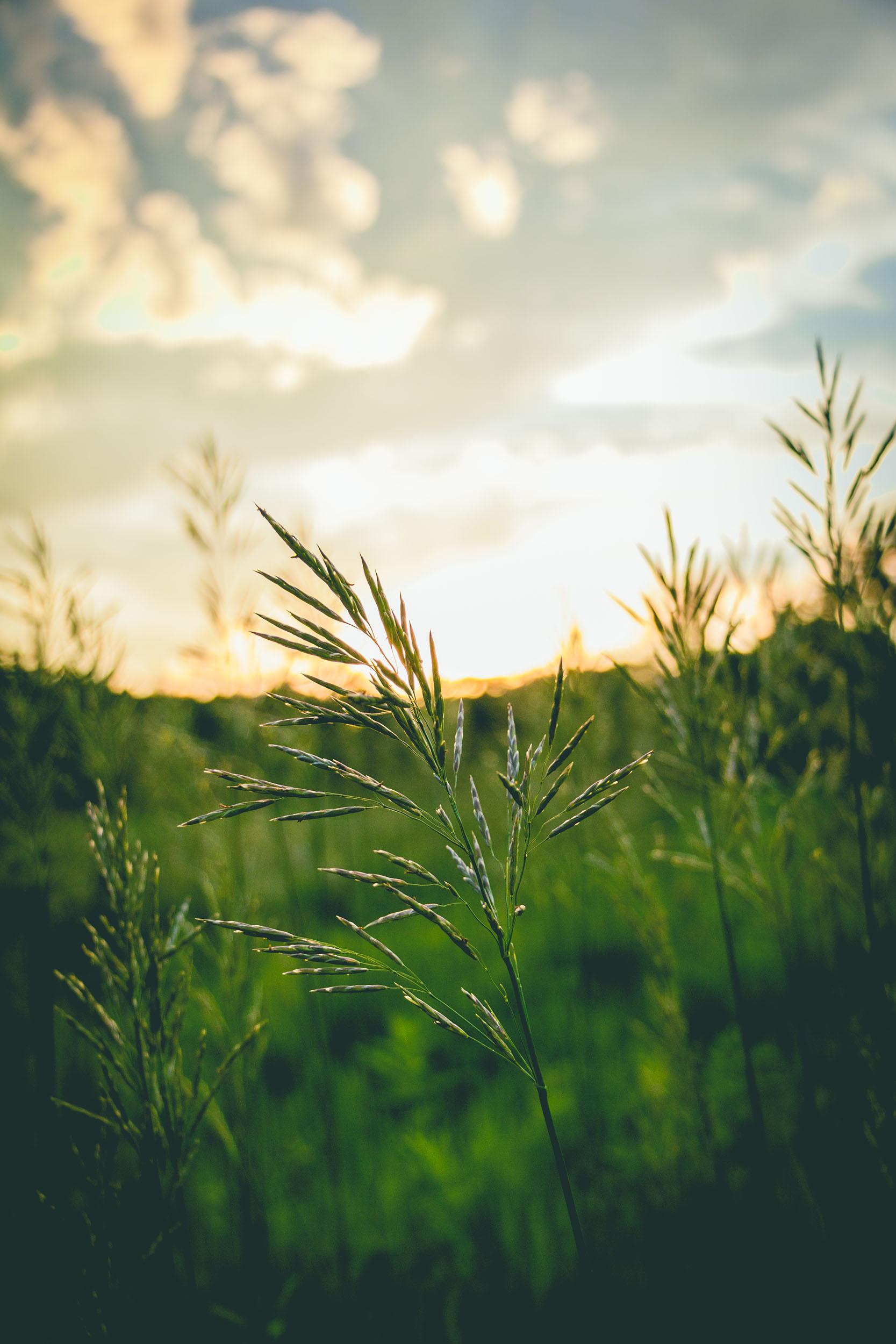 Matt Grandbois Photography — lonely_grass