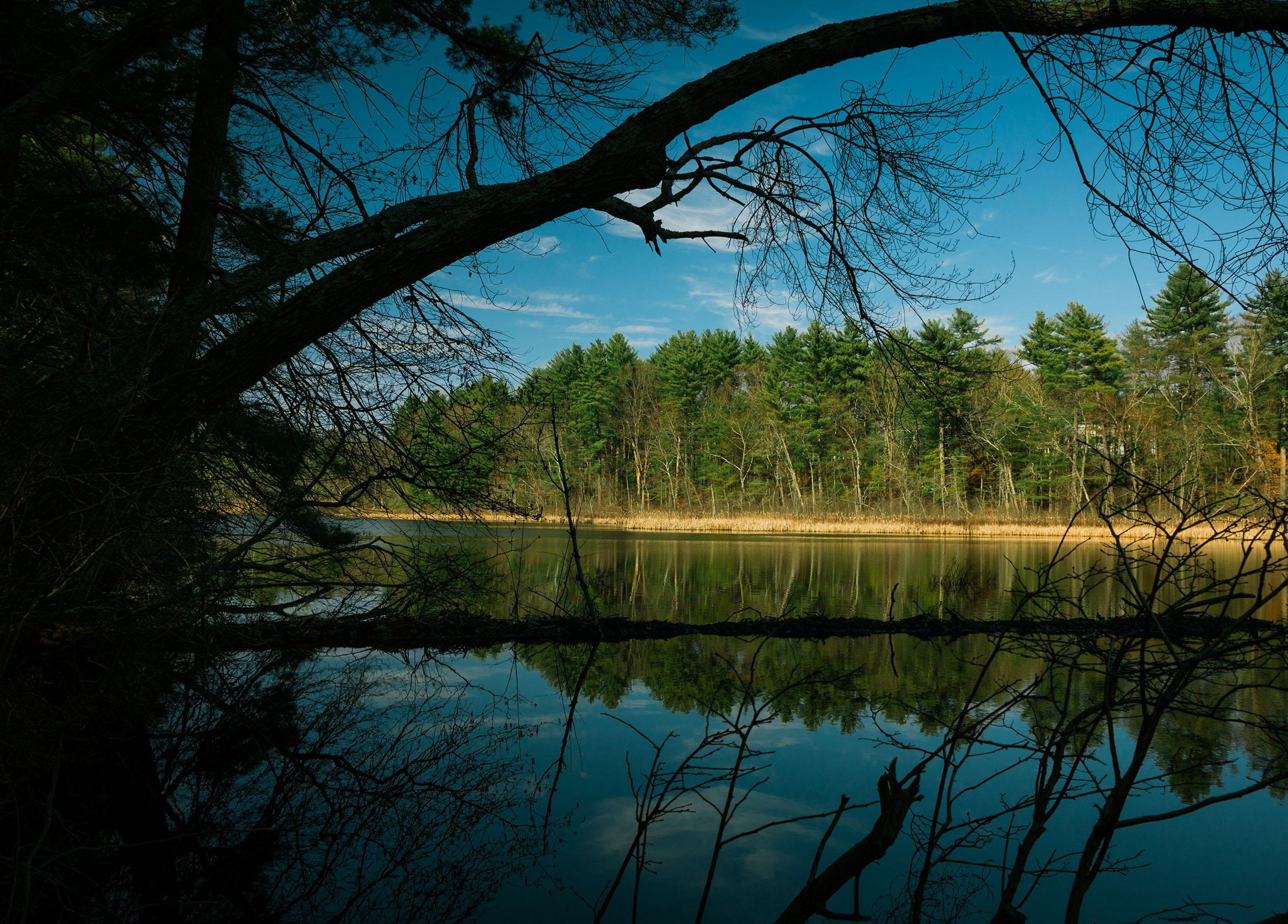 Matt Grandbois Photography — pond_reflections