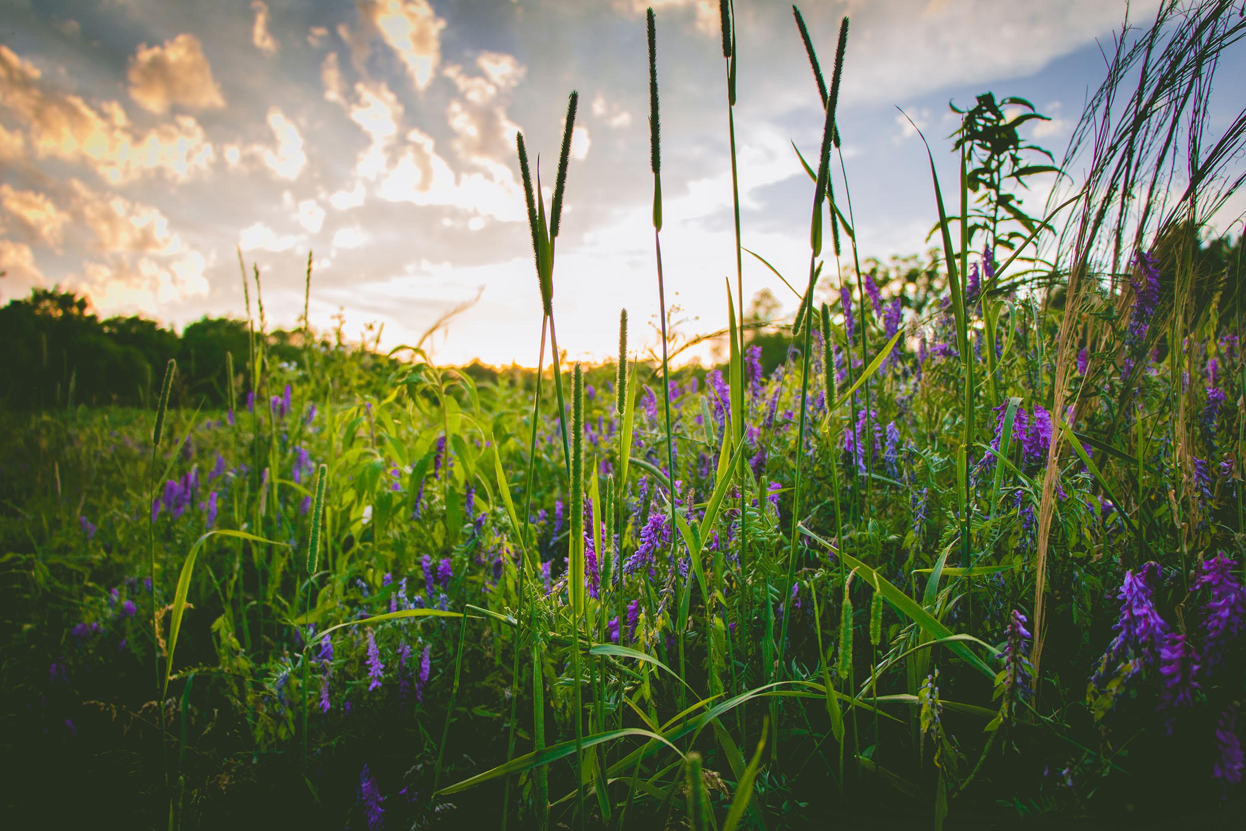 Matt Grandbois Photography — sunset_flowers